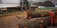 08 Pilous Forestor.JPG